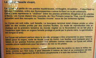 Le-Cycas