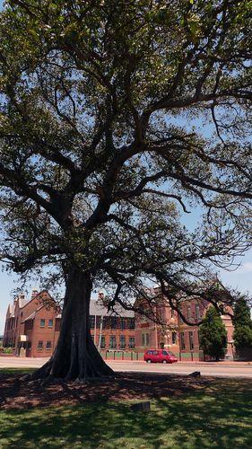 Tree-of-knowlege