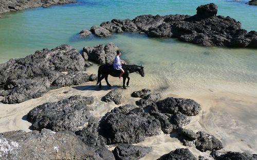 Atapouri-cheval2